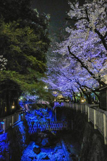 【ゆっくり】都内で花見をするなら2選(新宿御苑・飛鳥山)